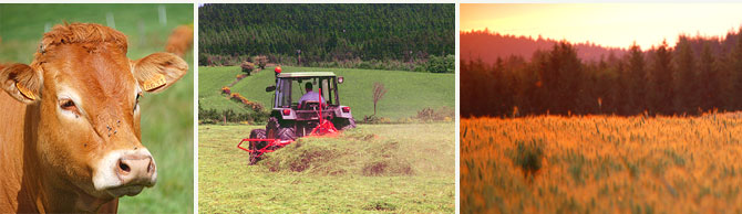 agriculture à Saint-Genest-Malifaux