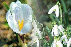 fleurs d'hiver dans les champs