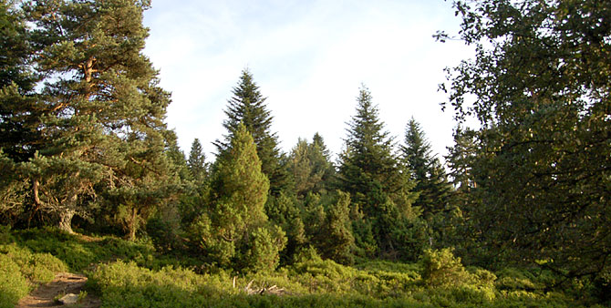 paysage de Chaussitre, classé Site Natura 2000