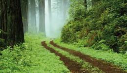 randonnée dans le Bois Ternay