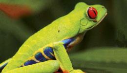 Costa Rica, la fièvre verte