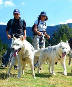 canirandoonées avec des chiens nordiques