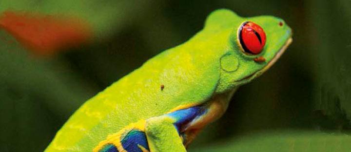 Carnet de voyage Costa Rica, la fièvre verte