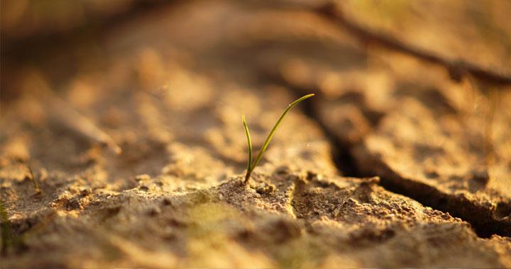 <p>Procédure<br /> <strong>Indemnisation des pertes de récolte pour la sécheresse estivale et automnale de 2018</strong></p>