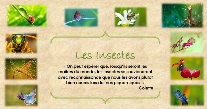 Exposition Insectes